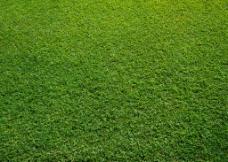 绿色草地草坪图片