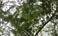 树影斑驳图片