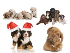 宠物狗高清分层图图片