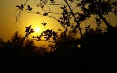 树叶 剪影图片