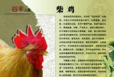 家禽类展板图片