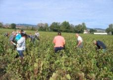 法国手工葡萄酒图片