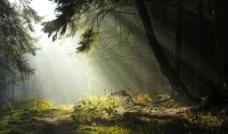 树林 阳光 田园图片