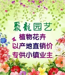 花卉園藝圖片