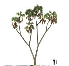3D树木模型图片
