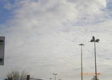 海鸥翔集图片