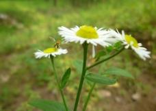 白色小碎花图片