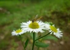 花 蚱蜢 蚜虫图片