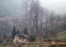 枯树老屋图片
