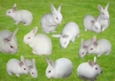 兔素材图片