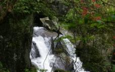 杜鹃溪水图片