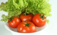 西红柿 生菜图片