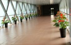 大厅走廊图片