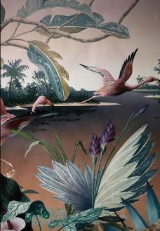白鸬鸟图片