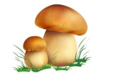 野生菌图片