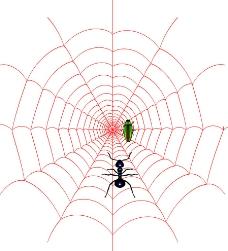 蜘蛛网绘制图片