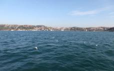 海鸥与大海图片