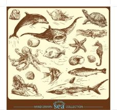 夏季海底生物手绘线稿素材图片