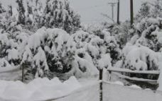 2011年的雪图片