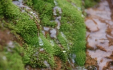 山涧绿苔图片