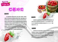 草莓种类图片