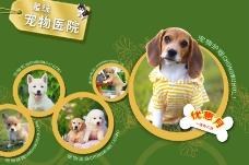 宠物医院网站图片
